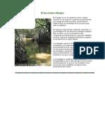elecosistemamanglar-151230010822