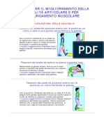 Esercizi Per Migliorare Mobilità Articolare e Allungamento Muscolare