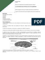 Laboratorio Disección Cerebro