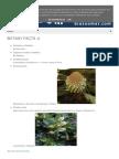 Botany Facts