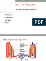 Vessels.ppt