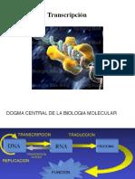 Clase 4 Transcripción y Traducción Mecanísmos de Regulación de La Expresión Génica