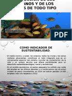 Proteccion de Oceanos