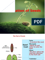 germination of seed.pptx