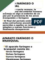 Embriologia Arcos Faringeos