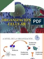 organizacincelularparaslideshare-110406124615-phpapp02.ppt