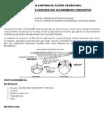 Inspeccion Sanitaria El Filetes de Pescado
