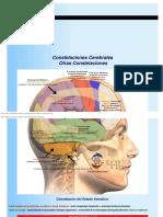 Nueva Medicina Germanica Hamer Otras Constelaciones Cerebrales