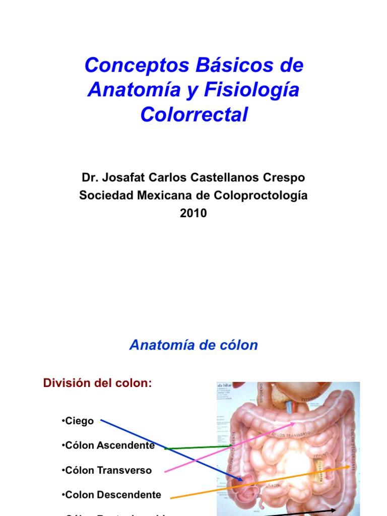 Famoso Anatomía Colon Transverso Inspiración - Anatomía de Las ...