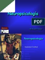 002 Modelos Neuropsicologicos