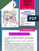 Aparato Reproductor de La Hembra (2)