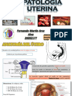 Patología Uterina PDF