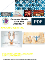 Embriologia Aparato Genital Femenino