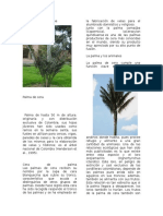 plantas nativas ecologia