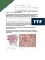 Anatomia patologica. casos clinicos