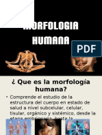 Morfologia Humana