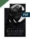 A Special Blackfish Screening at MOMA