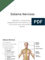 Sistema Nervioso (1)