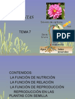 Tema7 Las Plantas