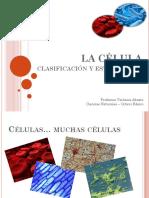 8°-C19-Clasificación-y-estructuras-celulares (1)