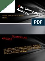Las Glándulas Anexas Claudio