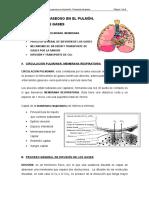 Difusión de Gases en La Membrana Respiratoria