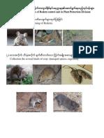 rodents  ksl