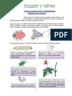manejo-de-mi-huerto-familiar.pdf