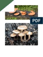 Gambar Fungi