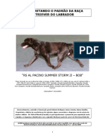 Padrão Comentado - Portugues Versão 4.1
