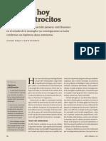 Astrocitos