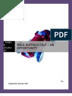 Male Buffalo Calves--- An Opportunity
