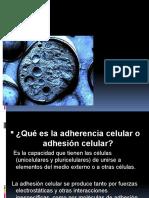 Adherencia Celular