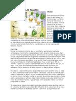 Ciclo de Vida Las Plantas