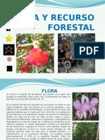 Flora y Recurso Forestal