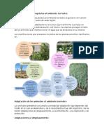 Adaptación de Los Vegetales Al Ambiente Terrestre