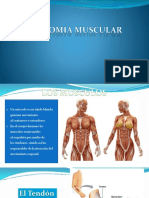Clase IV. Anatomia Muscular