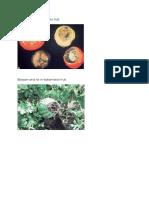 Plant Diseases with Pics.doc