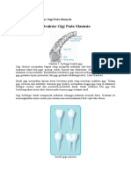 Jenis Gigi Dan Struktur Gigi Pada Manusia