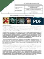 Guia de Laboratorio 1. Equinodermos (2)