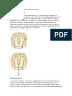 Odontosección en Dientes Multirradiculares