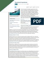 dolphin info