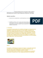 Desarrollo de competencias.docx