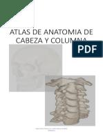 IMAGENES de Anatomia de Cabeza y Columna
