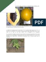 Manual Para El Cultivo de La Lechosa