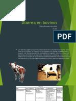 Diarrea en Bovinos 1