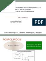 BIOQUIMICA(Fosfolípidos, céridos, monocapas y bicapas)