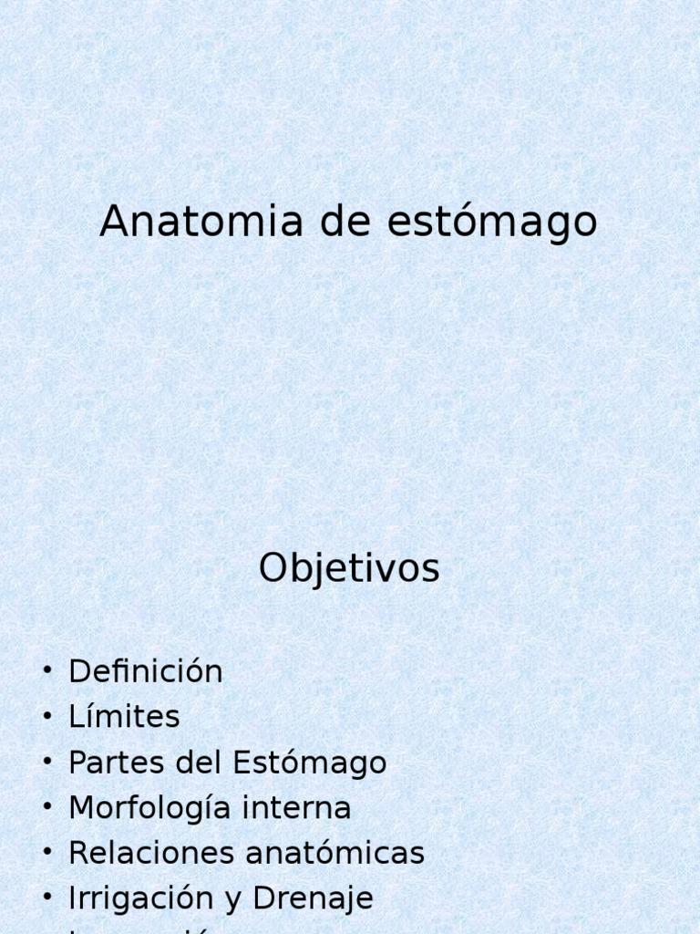 Anatomia de Estómago