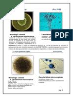 176784976-Atlas-de-Hongos-2-1-Docx.pdf