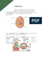 Unicelulaes y Pluricelulares Camilaja